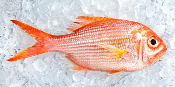 ¿Cómo reconocer el pescado fresco?